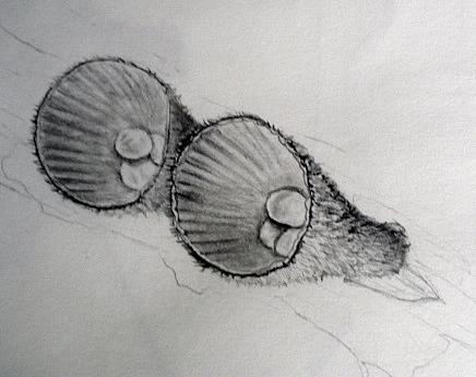 The aptly named Birds-nest fungus
