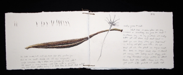 """From my """"Seed"""" journal"""