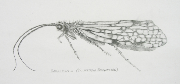 Jill Houser's caddisfly