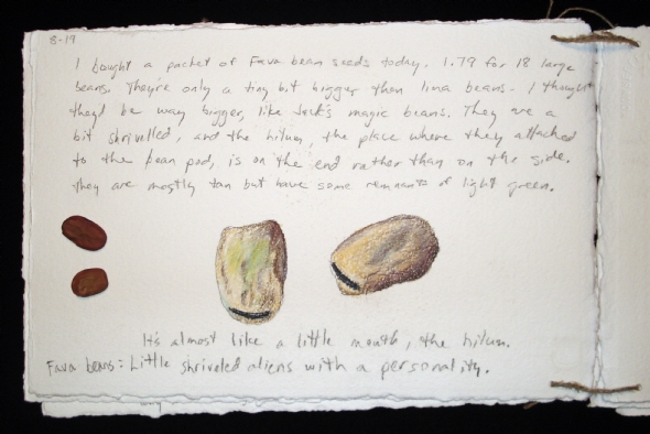 """Fava beans from the """"Seeds"""" journal"""