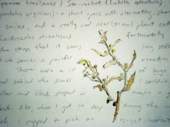 Notes on my discovery of Sargassum