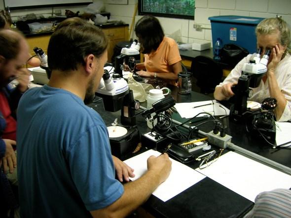 Scientific Illustration Workshop at Highlands Biological Station