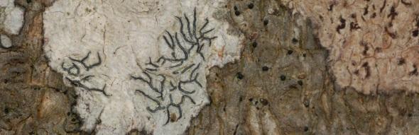 lichen crop 6